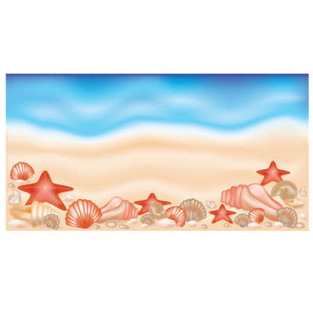 cockle: Summer banner on sand with shells and starfishes,