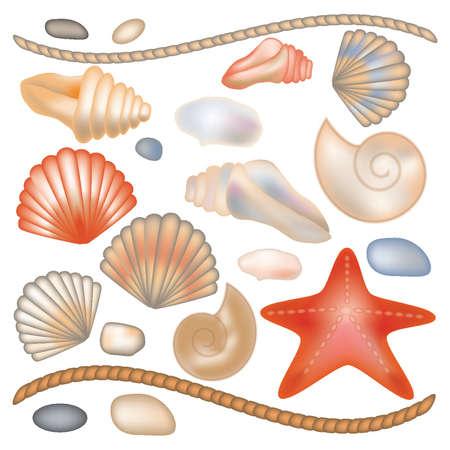 Establecer conchas y estrellas de mar, ilustración, vector