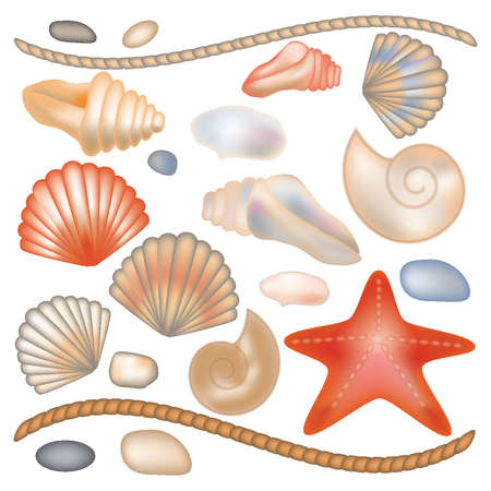 seashell: Set seashells and starfish isolated, vector illustration