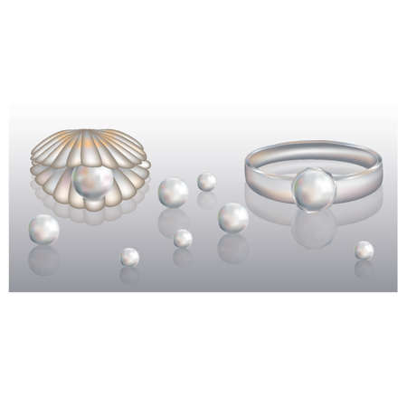 cockle: Beautiful shell and ring with pearl Illustration