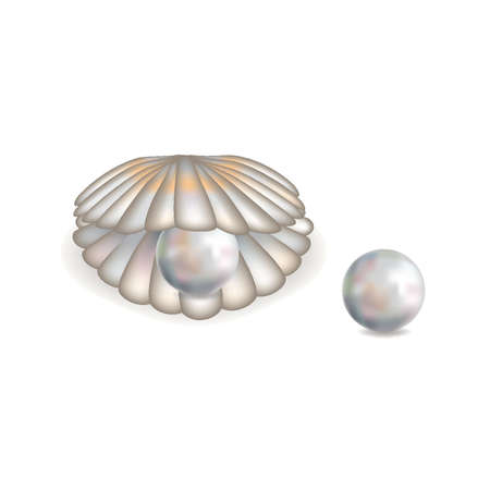 perl: Beautiful shell with pearl isolated Illustration