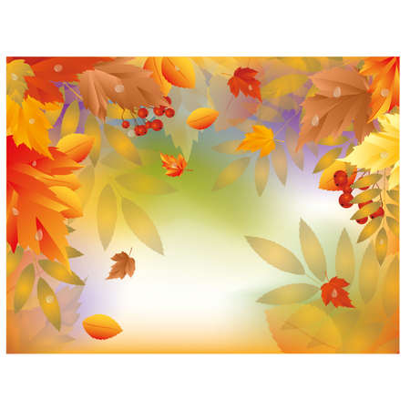 Autumn card with maple leafs illustration Vector