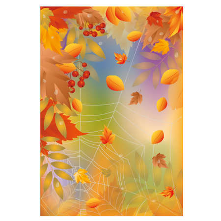 wood spider: Autumn card with spider web, illustration Illustration