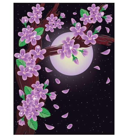 Cherry blossoms on night sky background, vector illustration Vector
