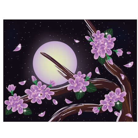 Sakura blossoms on night sky background, vector illustration Vector