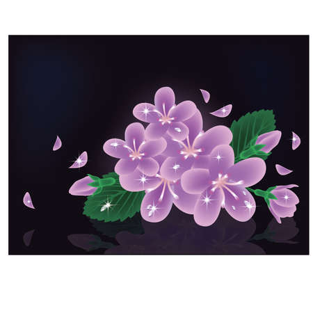 Sakura flowers card, vector illustration  Vector