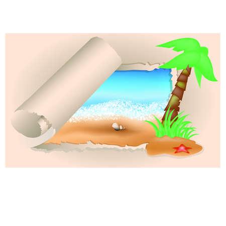 summer holidays: Summer card  Palms and shells illustration