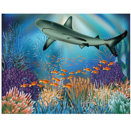alga: Underwater wallpaper with shark illustration Illustration