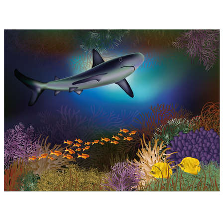 Underwater wallpaper with shark and fishes Vector