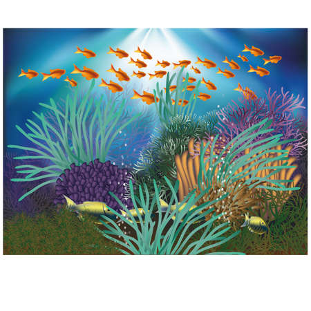 Underwater natural wallpaper illustration Vector