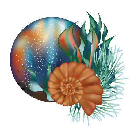 alga: Underwater world banner with seashell illustration Illustration