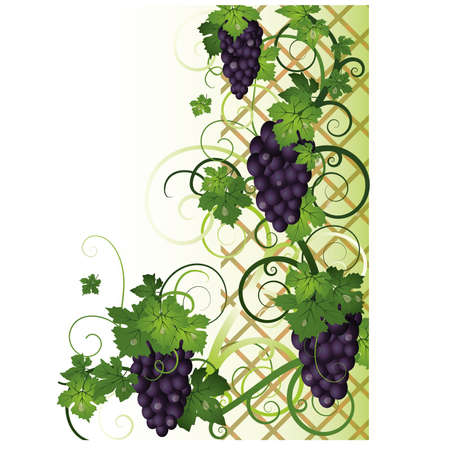 Autumn banner with grapes, vector illustration  Vector