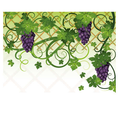Season autumn banner with grapes, vector Vector