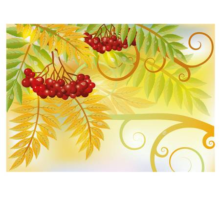 rowan: Autumn card with red rowan berry, vector illustration