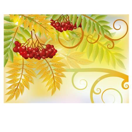 Vogelbeere: Herbst-Karte mit roten Vogelbeeren, Vektor-Illustration