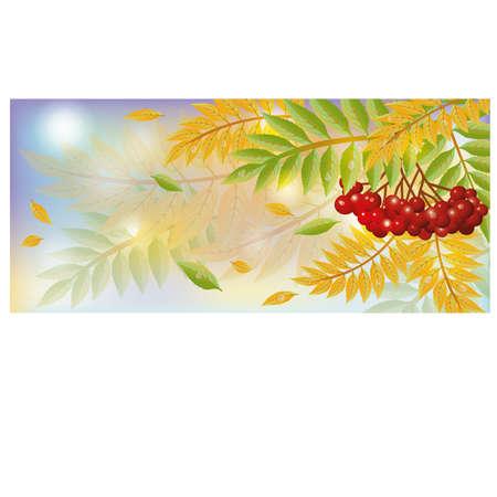 mountain ash: Autumn banner with mountain ash berry, vector illustration Illustration
