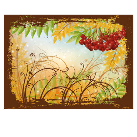 Autumn postcard with red rowan berry, vector  Vector