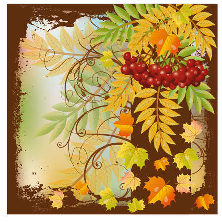 ashberry: Autumn card with red rowan berry and maple leaves, vector illustration Illustration
