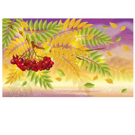 ashberry: Autumn elegant background, vector illustration
