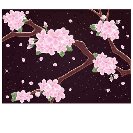 Spring sakura night card illustration