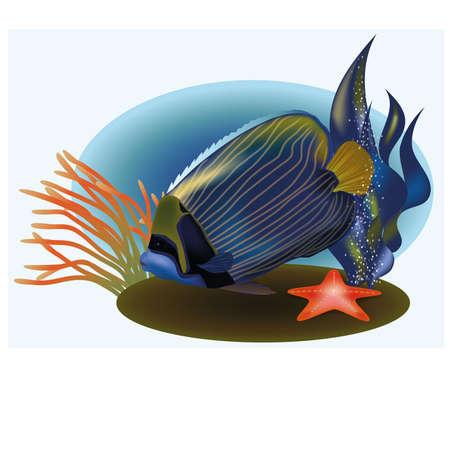 seafish: Marine life with tropical fish, vector illustration