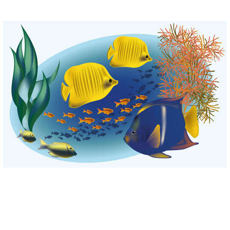 alga: Marine life with tropical fishes, vector illustration