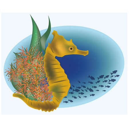 Marine life with sea horse, vector illustration  Illustration