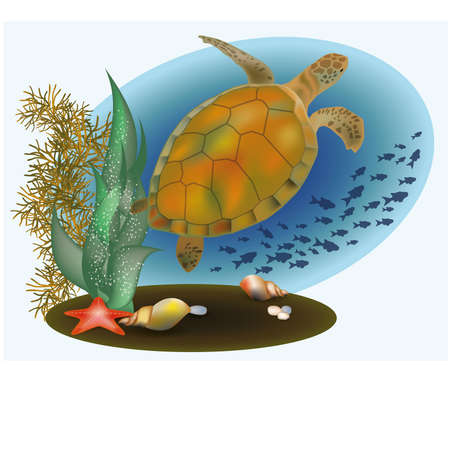 alga: Marine life with turtle and starfish, vector illustration