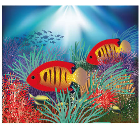 exotic fish: Underwater wallpaper with tropical fish, vector illustration