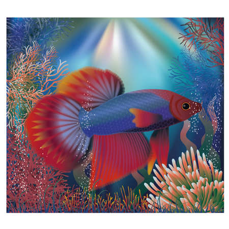 fighting fish: Underwater wallpaper with tropical well fish