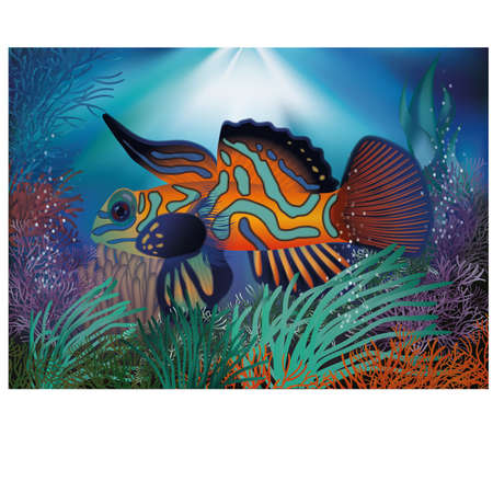 exotic fish: Underwater wallpaper with  tropic fish