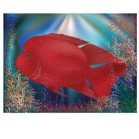 seafish: Underwater wallpaper with red tropical fish, vector illustration