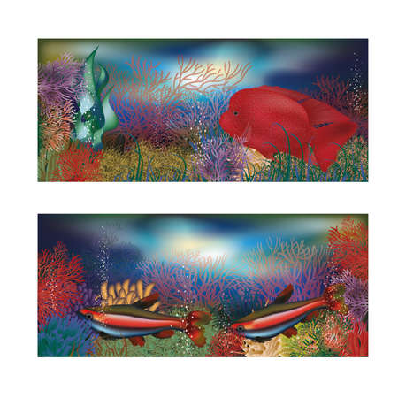seafish: Underwater banners with red tropical fish, vector illustration