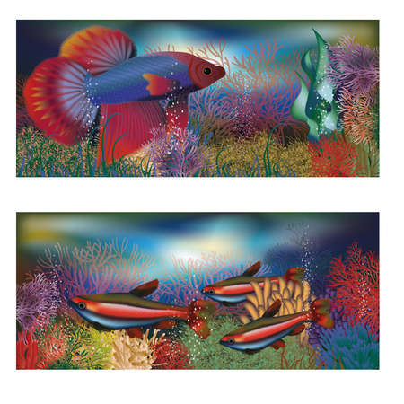 sub tropical: Underwater banners tropical fish, vector illustration