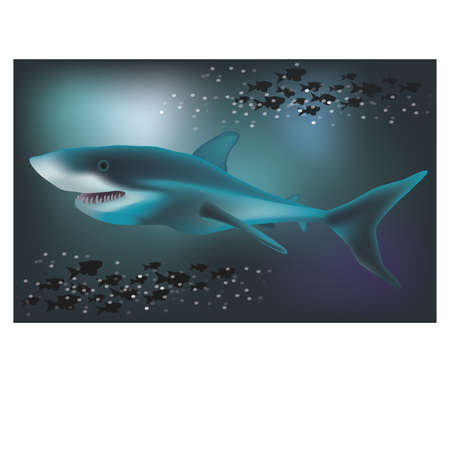 sub tropical: Underwater background with White Shark, vector illustration