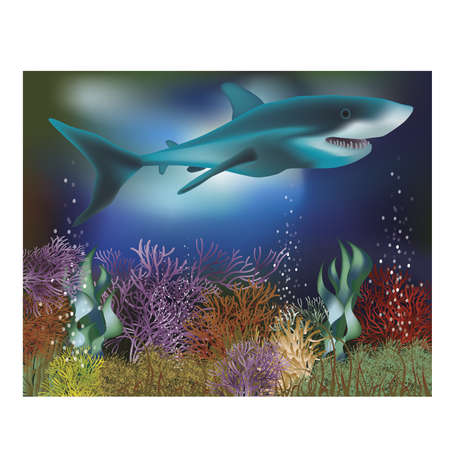 sub tropical: Underwater wallpaper with Shark