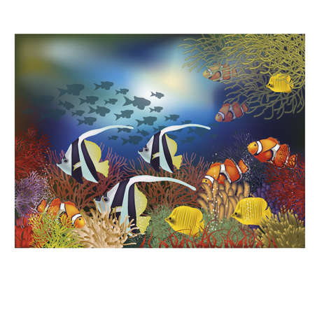 clown fish: Underwater wallpaper with tropical fish, illustration