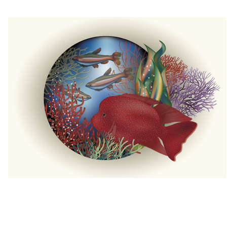 sub tropical: Underwater card red tropical fish, vector illustration