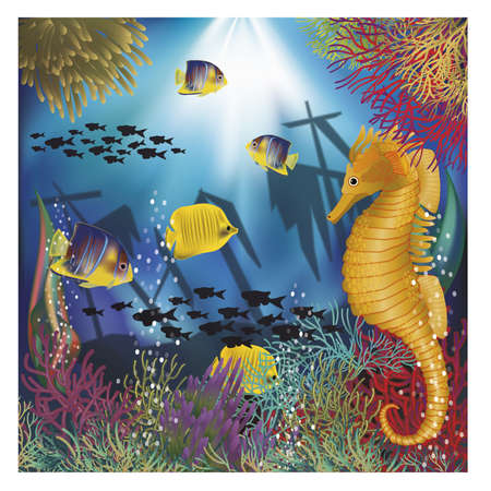horsefish: Underwater wallpaper with tropical fish
