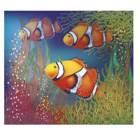 anemonefish: Underwater card with clownfish