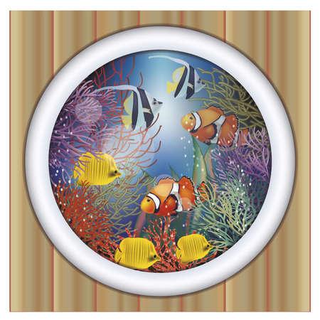 anemonefish: Underwater ship porthole tropical fish