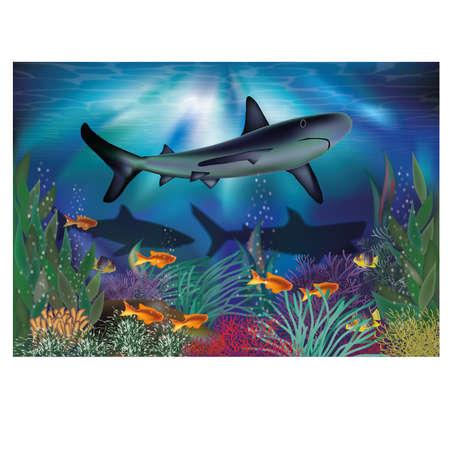 lagoon: Underwater tropical card with shark, vector illustration Illustration