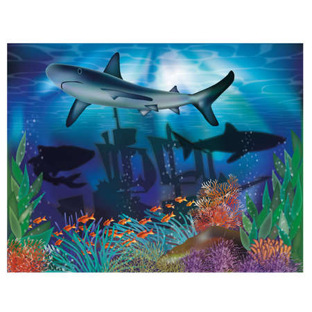 Underwater tropical background with shark, vector illustration Illustration