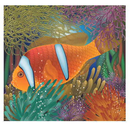 Underwater tropical card with clownfish, vector illustration