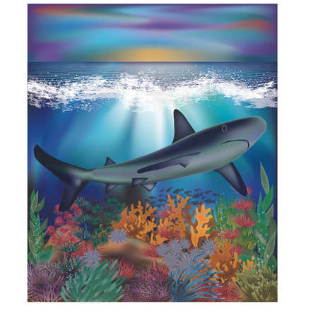 Underwater background with Shark