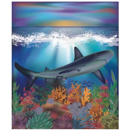 Underwater background with Shark