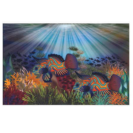 Underwater tropical card with mandarin dragonet fish, vector illustration