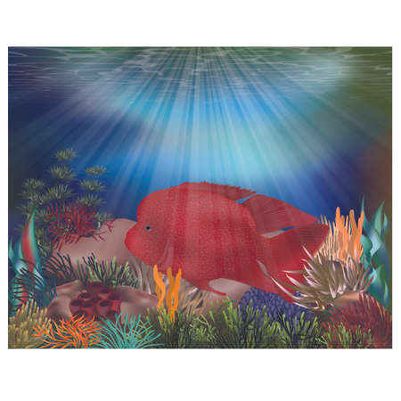 Underwater tropical card with parrotfish, vector illustration