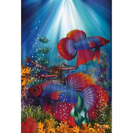 Underwater card with Betta Splendens Thai fighting fish, vector illustration