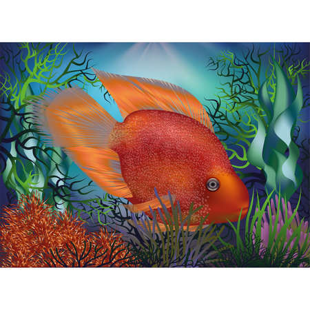 Underwater background with fish Red Parrot, vector illustration Çizim